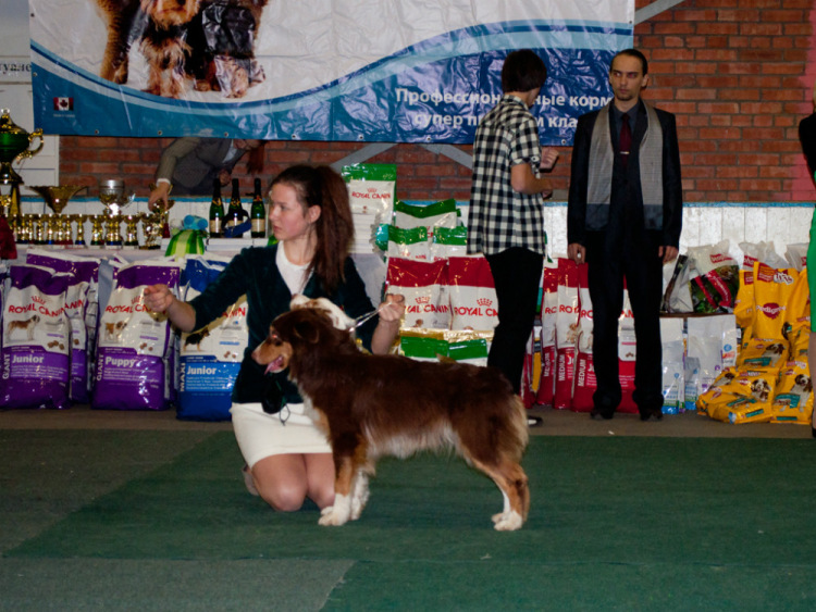 Выставочные успехи наших собак - 4 - Страница 38 100222-4648b-72681711-m750x740-udf6cb
