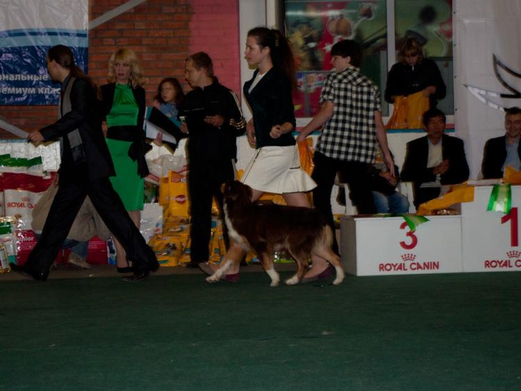 Выставочные успехи наших собак - 4 - Страница 38 100222-fd6d9-72681705-m750x740-u02ea0