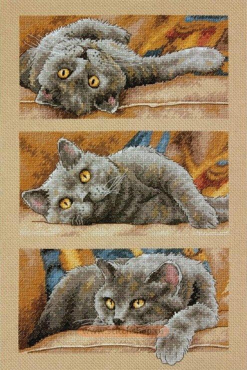 Фото котов с вышивкой